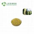 Usnea Extract Powder Usnic Acid 98%