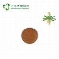 folium isatidis extract Indigowoad Leaf