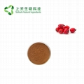 hawthorn fruit extract powder