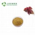 perilla leaf extract powder 1