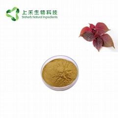 perilla leaf extract pow