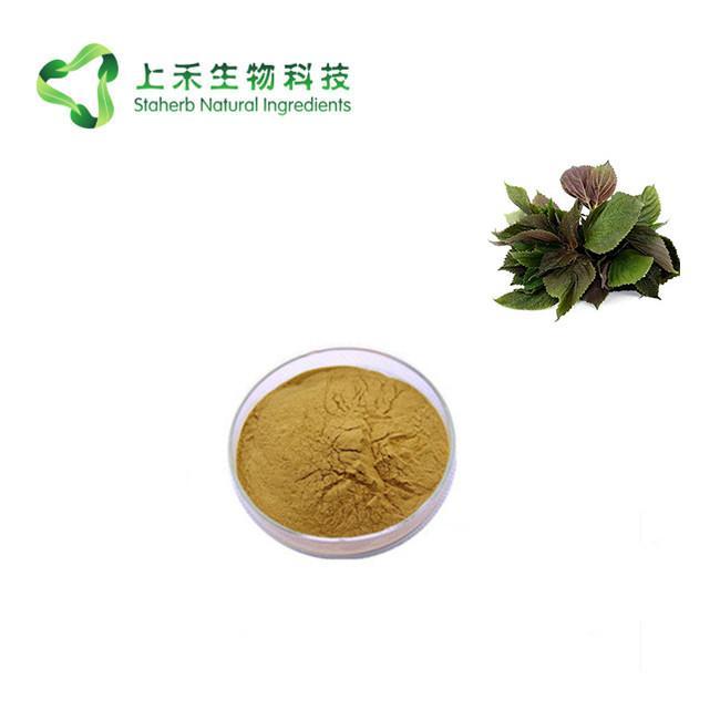 perilla leaf extract powder 3