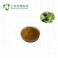 Siberian Ginseng Extract Eleutheroside Powder