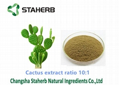 100% Natural Cactus plant Extract powder /Opuntia dillenii
