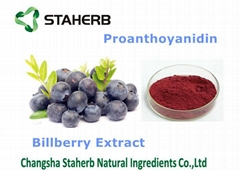 best selling high quality natural bilberry fruit extract powder proanthoyanidin