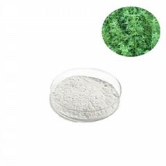 二氢青蒿酸 Dihydroartemisinic acid 99%