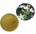 swertia chirata extract swertiamarin