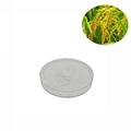 rice bran extract ferulic acid