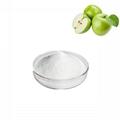 apple extract phloretin 98%
