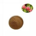 Rhodiola rosea extract rosavin