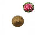 Rhodiola rosea extract salidroside