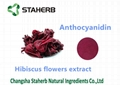 hibiscus flower extract anthocyan