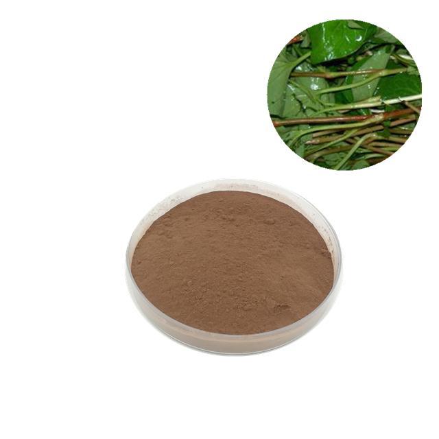 Natural Houttuynia Cordata Extract Powder