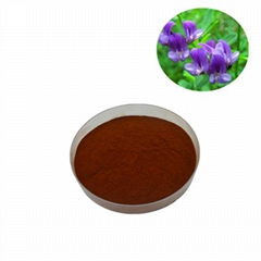 Top Quality Alfalfa Extract Powder