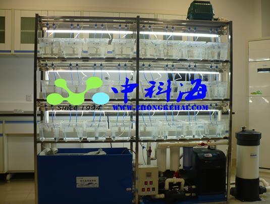 斑馬魚系統 1