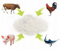 廠家直供硫酸軟骨素 90含量