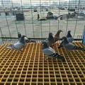 玻璃钢格栅玻璃钢格栅板 3