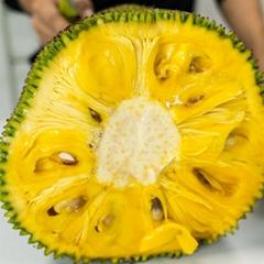 海南菠萝蜜新鲜现摘现发货源充足18-38斤