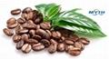 寧波咖啡進口清關代理 3