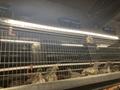 LED養殖燈2000W調光電源 5