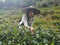 UNR-A  Riche Se Black Tea