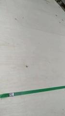 打包箱9釐多層板楊木膠合板沙發板高檔多層板