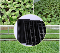 China wholesale Cheap flat plastic seed tray for nursery