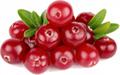 蔓越莓提取物 1