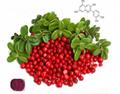 蔓越莓提取物 4