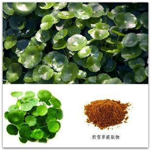 Centella asiaticaextract-Asiaticoside&Asiatic Acid 3