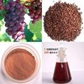 葡萄籽提取物 2