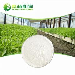 Organic Stevia Sugar SG 95 Stevia Leaf Extract Powder Goods In Stock