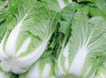 新鮮蔬菜配送