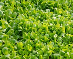 农产品配送中心 配送蔬菜