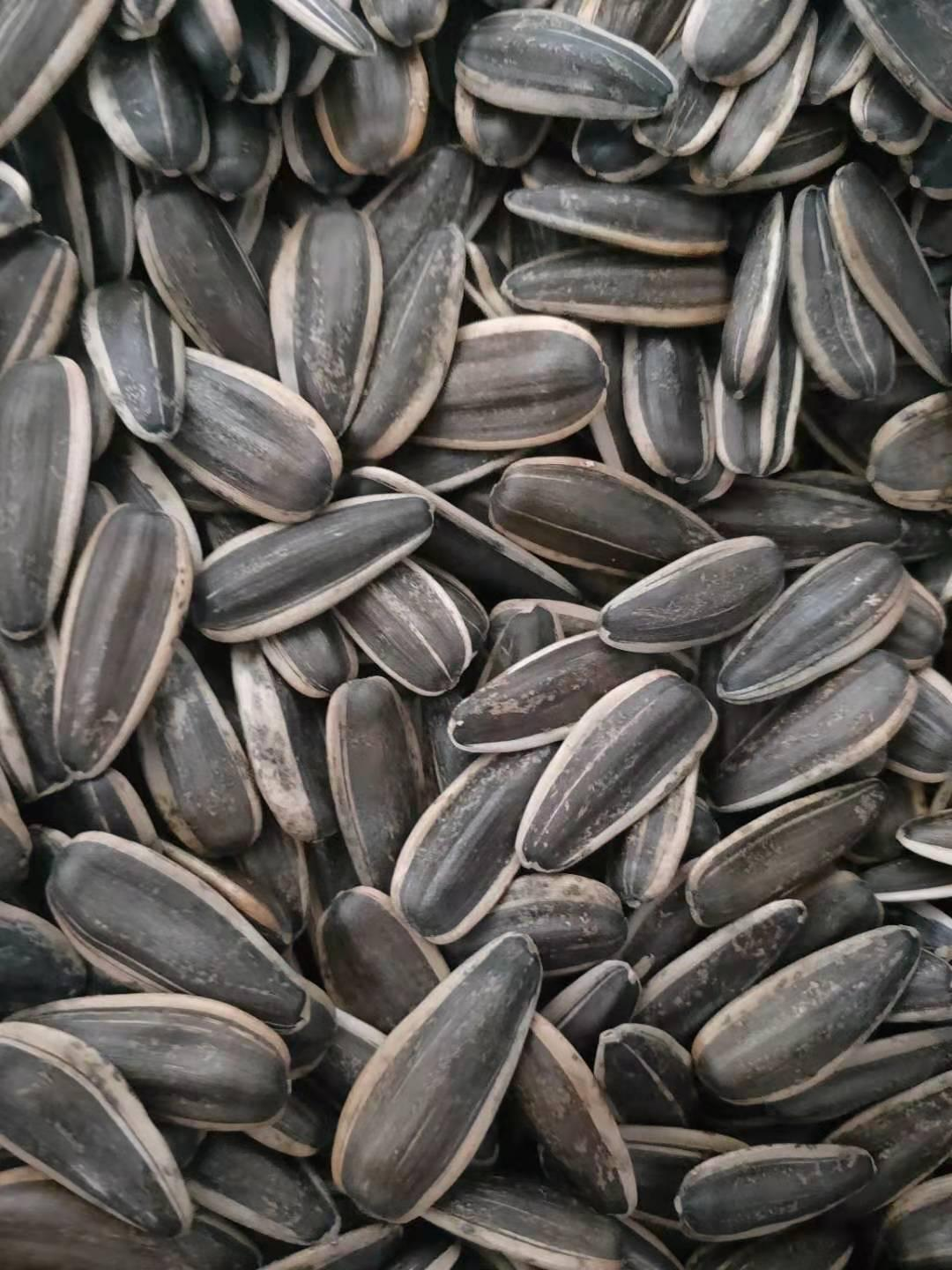 sunflower seed of type 363 4