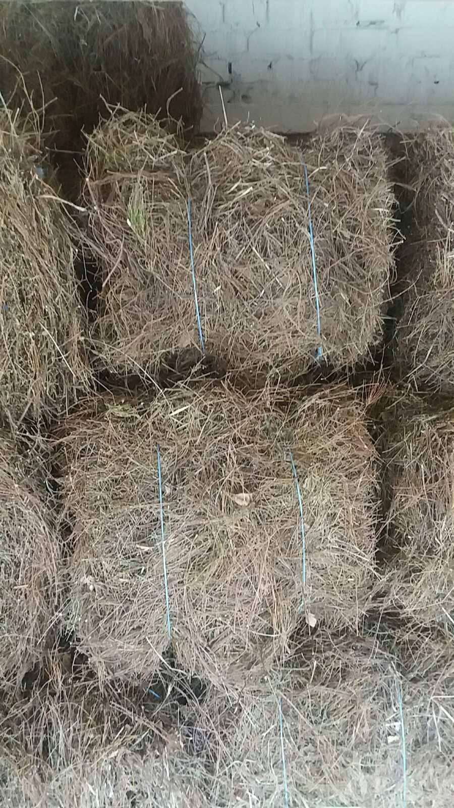 Heather Calluna vulgaris bales in bulk 2
