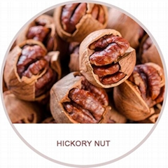 hickory nuts chinese walnuts