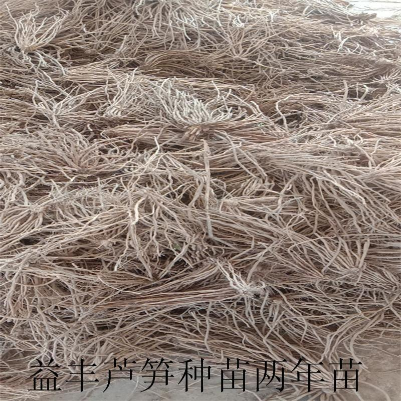綠蘆筍專業種植合作社 供應蘆筍種苗 4