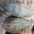 贵族南瓜种子 蜜瓜也叫丑瓜种子 1