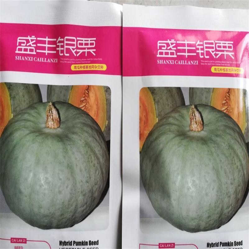 南瓜品种 银栗南瓜种子 3