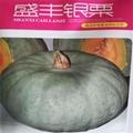 南瓜品種 銀栗南瓜種子 4