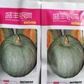 南瓜品种 银栗南瓜种子 5