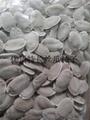 2米特長絲瓜種子 白色絲瓜種子批發 3