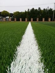 美创免填充足球场C型人造草坪