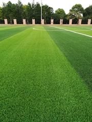 美创TS型填充型人造草坪