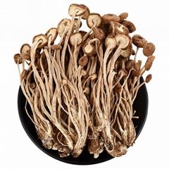Dried Mushroom Agrocybe aegerita 500g
