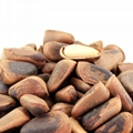 Organic cheap bulk open pine nut pine seed pine nuts in shell