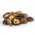 Hot Selling China Shiitake Mushroom Dried Mushroom 3