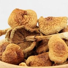 Nameko mushroom nameko shiitake mushrooms