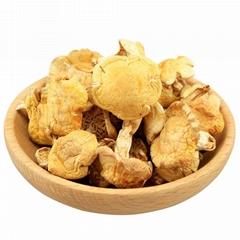 Small yellow mushroom